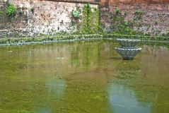 Algae covered pond. Close up of green algae covered pond enclosed by walls Stock Photos
