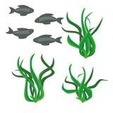 Algae. Fish swim near the algae Stock Images