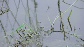 Green Plants in the Swamp. Algae flowing down a canal Green Plants in the Swamp stock video