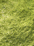 Algae green Background Stock Photos