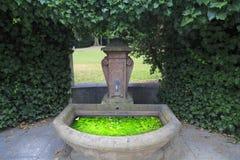 Algae grow in a water basin, Frankfurt, Germany Royalty Free Stock Photos