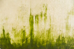 Algae. Grows on a wall near washing area at a farm Royalty Free Stock Image