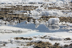 Algae and ice on the thawing Lake Baikal in the spring, Siberia Royalty Free Stock Image