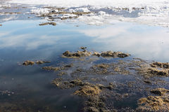 Algae and ice on the thawing lake in the spring, Baikal, Siberia Stock Images