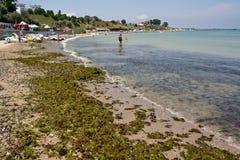 Algae invasion. Black Sea shore invaded by algae in Eforie Sud ,Romania Royalty Free Stock Image