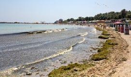Algae invasion Royalty Free Stock Images