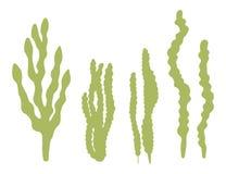 Algae isolated on white background vector illustration.  Stock Photos