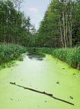 Algae lake. Royalty Free Stock Photography