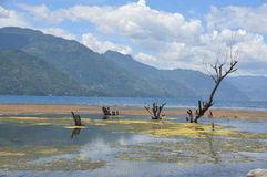 Algae on Lake Atitilan Guatemala. Photo of algae close to the shores of Lake Atitilan, Guatemala Royalty Free Stock Photos