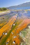 Algae at Lake Bogoria, Kenya. Colorful algae around hot springs at Lake Bogoria in Kenya Royalty Free Stock Photos