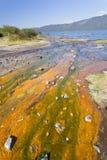 Algae at Lake Bogoria, Kenya. Detail of colorful algae around hot springs at Lake Bogoria in Kenya Stock Photos