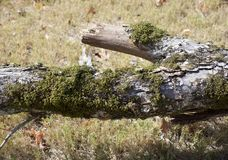 Algae, Lichens, and Mosses on a Tree Stock Images