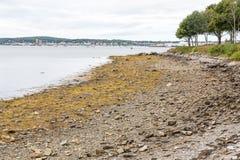 Algae at Low Tide Stock Images