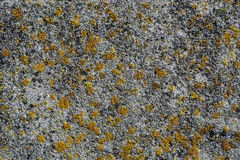 Algae and mold On A concrete wall. Stock Photo