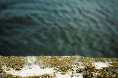 Algae and Mold On A damaged concrete wall and beautiful sea. Stock Image