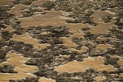 Algae in nepali swamp, Bardia, Nepal Royalty Free Stock Photography
