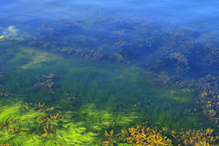 Algae in the ocean floor Stock Photos