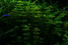 Algae in the ocean floor. Stock Image