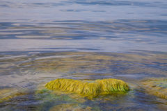 Algae polluted water Royalty Free Stock Photo