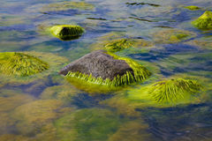 Algae polluted water Stock Photo