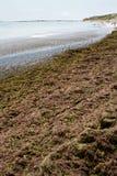 Algae pollution Stock Photos