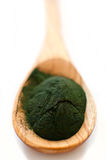 Algae powder spirulina Stock Images