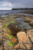 Algae puddle at Kimmeridge - Dorset, England. An algae puddle in low tide at Kimmeridge Bay Royalty Free Stock Photo