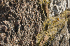 Algae Rocks Stock Photo