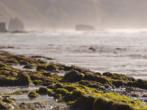 Algae rocks on the beach. With the sea in the background Royalty Free Stock Photos