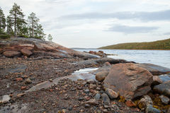 Algae, rocks and trees on the beach. Of White Sea, Russia royalty free stock photography