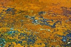 Algae rusty sea bottom as beautiful vibrant background Stock Photo