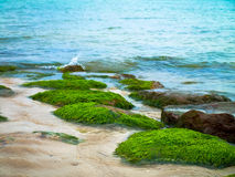 Algae on the sea Royalty Free Stock Image
