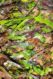 Algae seaweed posidonia oceanica dried and green Stock Photos