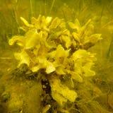 Algae Stock Images