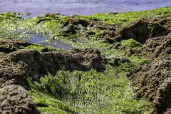 Algae and shells of mollusks of the seabed during low tide. Royalty Free Stock Photography