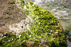 Algae on shore Stock Photos
