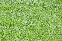 Algae texture Stock Images