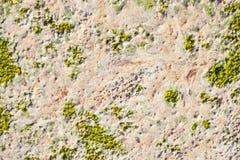 Algae texture on beach Stock Image