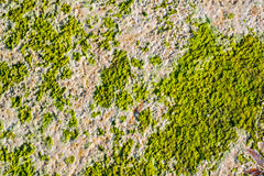 Algae texture on sand beach Royalty Free Stock Images
