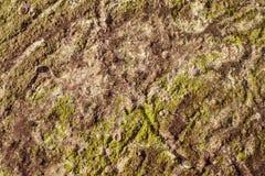 Algae texture on sand beach Royalty Free Stock Image