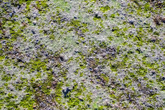 Algae texture on sand beach. Top view Royalty Free Stock Photography