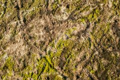 Algae texture on sand beach. Top view Stock Images