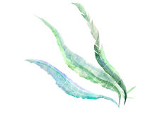 Algae: variant. Artistic watercolour algae against white background vector illustration