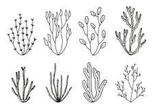 Algae vector set. hand drawings isolated.  royalty free illustration