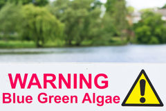 Algae warning Royalty Free Stock Image