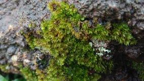 Algae Greenery Gross from Garden. AlgaeGreenery Gross Taken from My Garden royalty free stock images