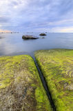 Algaes on large rocks in sea at cloudy evening. Large rocks covered with algae in sea at cloudy evening Stock Image
