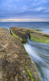 Algaes on large rocks in sea at cloudy evening. Large rocks covered with algae in sea at cloudy evening Royalty Free Stock Images
