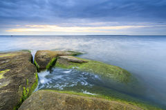 Algaes on large rocks in sea at cloudy evening. Large rocks covered with algae in sea at cloudy evening Royalty Free Stock Photography