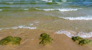 Algal, Algae blooms in Sunny Beach on the Black Sea coast of Bulgaria. Bulgarian coastline day green horizontal no people nobody outdoor outside resort sand stock photo